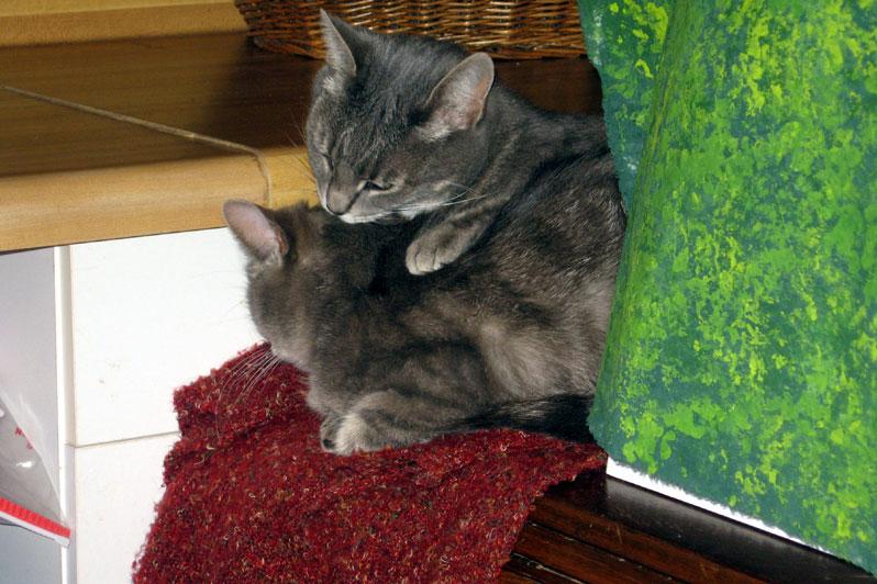Catsinsmallspace2
