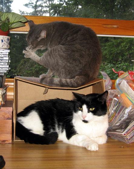Doubledeckercats