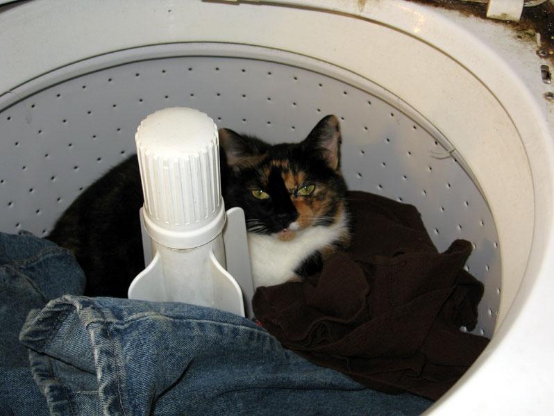 Laundrycat1