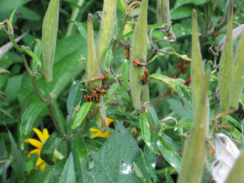 Mysterybugs1