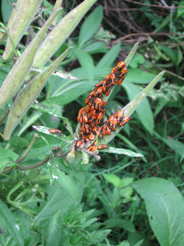 Mysterybugs2