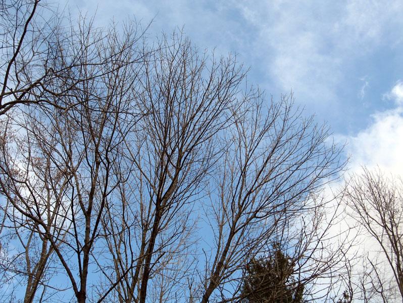 Treesandbluesky