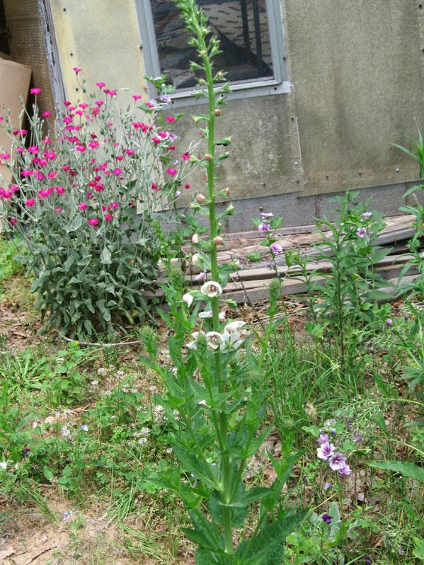 Unidentifiedfloweringplan