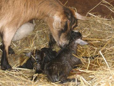 Newbornbabies