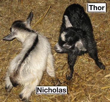 Thorandnicholas