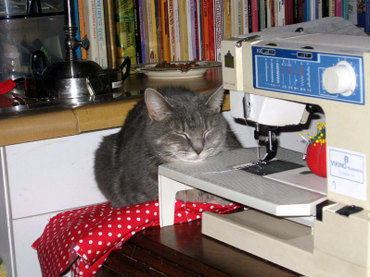 Kalisewingcat