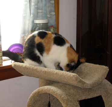 Cattree3